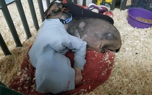 Lizzy and Heaven sleepng in the barn